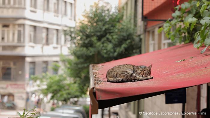 Photo tirée du documentaire Kedi - Des chats et des hommes sur laquelle un chat est endormi sur le parasol d'une terrasse d'Istanbul.