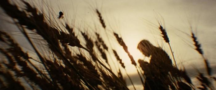 Photo de Brad Pitt dans le film L'assassinat de Jesse James par le lâche Robert Ford d'Andrew Dominik. Il s'agit d'une photo prise dans des champs, avec au premier plan des épis. Au second plan se tient Brad Pitt, flou, en train d'allumer un cigare, avec la lumière du soleil derrière lui.