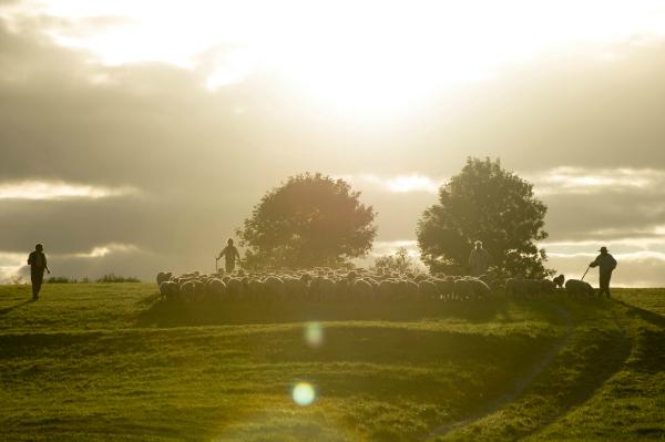 Photo du film Loin de la foule déchaînée réalisé par Thomas Vinterberg. Sur la photographie, nous voyons un paysage de campagne comprenant des éleveurs et leurs moutons.